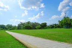 Trädet och gräsmatta på en ljus sommardag parkerar offentligt Arkivfoton