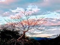 Trädet och himlen fotografering för bildbyråer