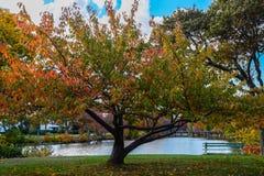 Trädet och parkerar bänken Arkivfoto