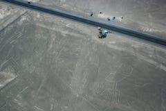 Trädet och räcker diagram på linjer som ses från nivån, Nazca linjer Royaltyfria Bilder