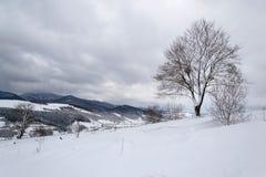 Trädet och snön Arkivbild