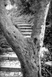 Trädet och trappan Arkivbild