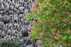 Trädet och väggen i Wallenstein arbeta i trädgården i Prague Royaltyfri Bild