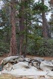 Trädet och vaggar Royaltyfria Bilder