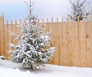 Trädet på bakgrunden av ett trästaket den första snön arkivbild