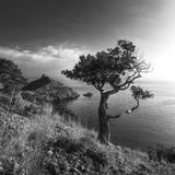 Trädet på bakgrunden av udde Kapchik arkivbild