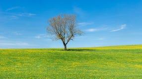 Trädet på blommaäng, blå himmel och vit fördunklar arkivbilder