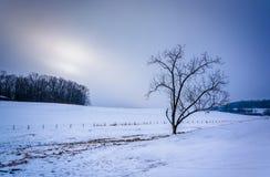 Trädet på en snö täckte lantgårdfältet i lantliga York County, Pennsylv royaltyfria bilder
