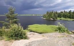 Trädet på flodbanken Arkivfoto
