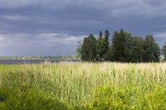 Trädet på flodbanken Royaltyfri Bild