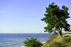 Trädet på havskusten Royaltyfria Foton