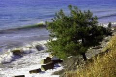 Trädet på havskusten Fotografering för Bildbyråer