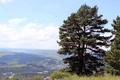 Trädet på klippkanten Arkivbilder