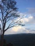 Trädet på vänstersidan har en himmel- och bergbakgrund I morgonen royaltyfria bilder