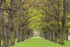 Trädet parkerar gränden Arkivfoton