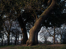 Trädet parkerar in på solnedgången Royaltyfri Bild