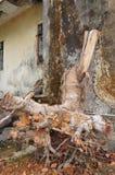 Trädet rotar Arkivbilder