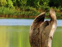 Trädet rotar Royaltyfri Bild