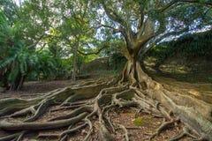 Trädet rotar abstrakt begrepp Arkivbild