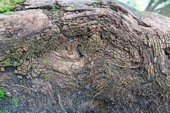 Trädet rotar - abstrakt bild Royaltyfri Foto