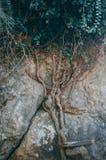 Trädet rotar att gå upp på en vagga royaltyfria bilder