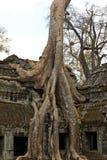 Trädet rotar att ta över Ta Phrom Arkivbilder