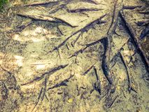 Trädet rotar bakgrund Royaltyfri Fotografi