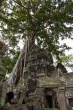 Trädet rotar beläggning återstår av Ta Phrom Arkivbilder