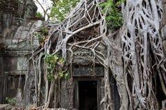 Trädet rotar den täckande dörren på Ta Phrom Royaltyfri Fotografi