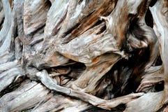 Trädet rotar i natur Arkivbilder