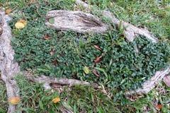 Trädet rotar naturbakgrund royaltyfri bild