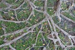 Trädet rotar naturbakgrund royaltyfria foton