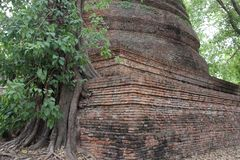 Trädet rotar och trädskäll med gamla Stupa arkivfoton