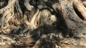 Trädet rotar och trädskället Naturfärg fotografering för bildbyråer