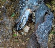 Trädet rotar som ett hus för djur arkivfoton