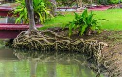 Trädet rotar systemet Royaltyfri Foto