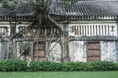 Trädet rotar växer på gammalt hus royaltyfria bilder