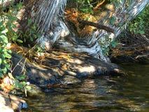Trädet rotar vid sjön, abstrakt begrepp Arkivfoton