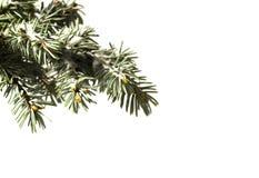 Trädet sörjer filialen som isoleras på vit bakgrund arkivbilder