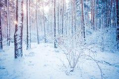 Trädet sörjer granen i magisk skogvinter med fallande snö Royaltyfri Fotografi