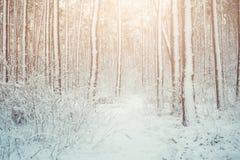 Trädet sörjer granen i magisk skogvinter med fallande snö Arkivbild