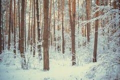 Trädet sörjer granen i magisk skogvinter med fallande snö Arkivfoton