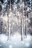 Trädet sörjer granen i magisk skogvinter med fallande solig dag för snö Royaltyfri Foto