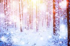Trädet sörjer granen i magisk skogvinter med fallande solig dag för snö Arkivbild