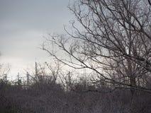Trädet ska just att förfalla Det är en fascinerande konst fotografering för bildbyråer