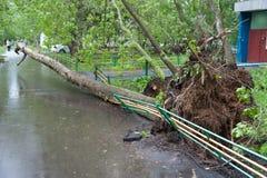 Trädet som är brutet vid en orkan i Moskva Arkivfoto