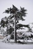 Trädet som täckas av vita insnöade trädgårdar för pumprum, Leamington Spa, UK - övervintra landskapet, 10 december 2017 arkivfoton