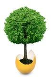Trädet som växer från äggskalet, isoleras på en vit bakgrund Arkivfoto