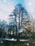 Trädet står bara i skogen arkivfoton