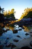 Trädet täckte öar reflekterade i tidvattenpöl på soluppgång Royaltyfri Fotografi